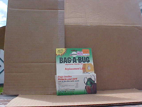 Bag A Bug Japanese Bettle Laure (bab jb)