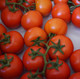 Seeds - Large Variety Tomatoes