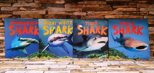 Camilla de la Bédoyére Discover Sharks (4 Book Collection)