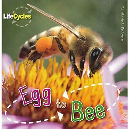 Life cycles: Egg to Bee (Children's Picture Book)