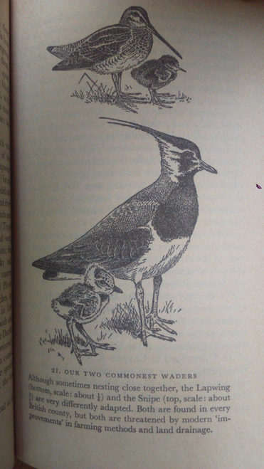 Campbell, Bruce Bird Watching For Beginners Vintage Penguin Puffin 1959 Paperback Ornithology
