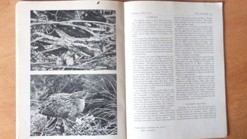 HMSO - Wild Birds & the Land - Vintage 1948 Ornithology Nature wildlife