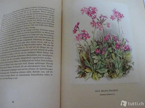 Meierhofer & Baumberger - Bergblumen der Heimat - Mountain Flowers of the Homeland- Hardcover Silva Zurich 1946   Buch auf Deutsch
