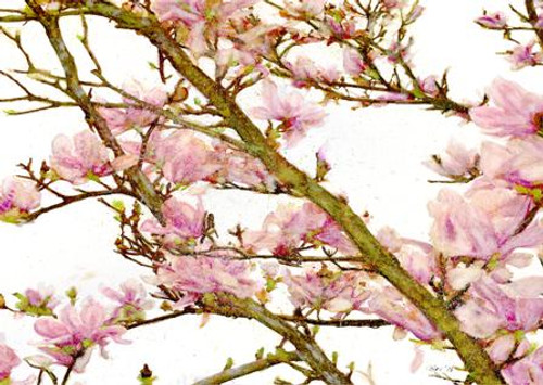 Magnolia - Greeting Card