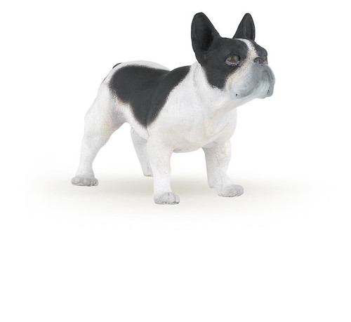 Black & White French Bulldog