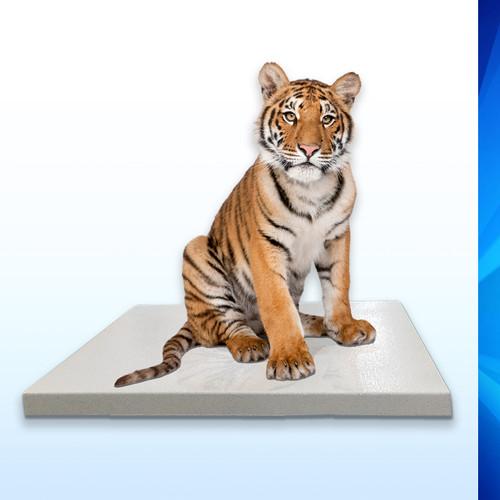 "SRV710W Zoological Mobile Platform Scale (36"" x 54"")"