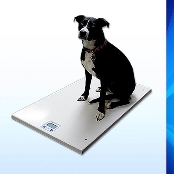 SRV945 Series Mobile Platform Animal Scale