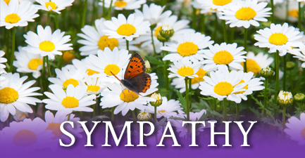 Sympathy Arrangements by Salvy the Florist