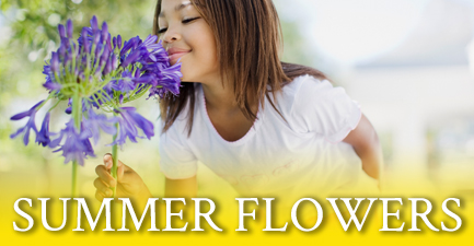 Summer Flower Vase Arrangements by Salvy the Florist