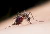 Malariad - 100 Capsules