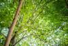Ra-Moon Leaf (Extract) - 2 oz