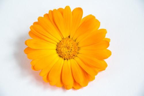 Calendula Cream - 4 oz