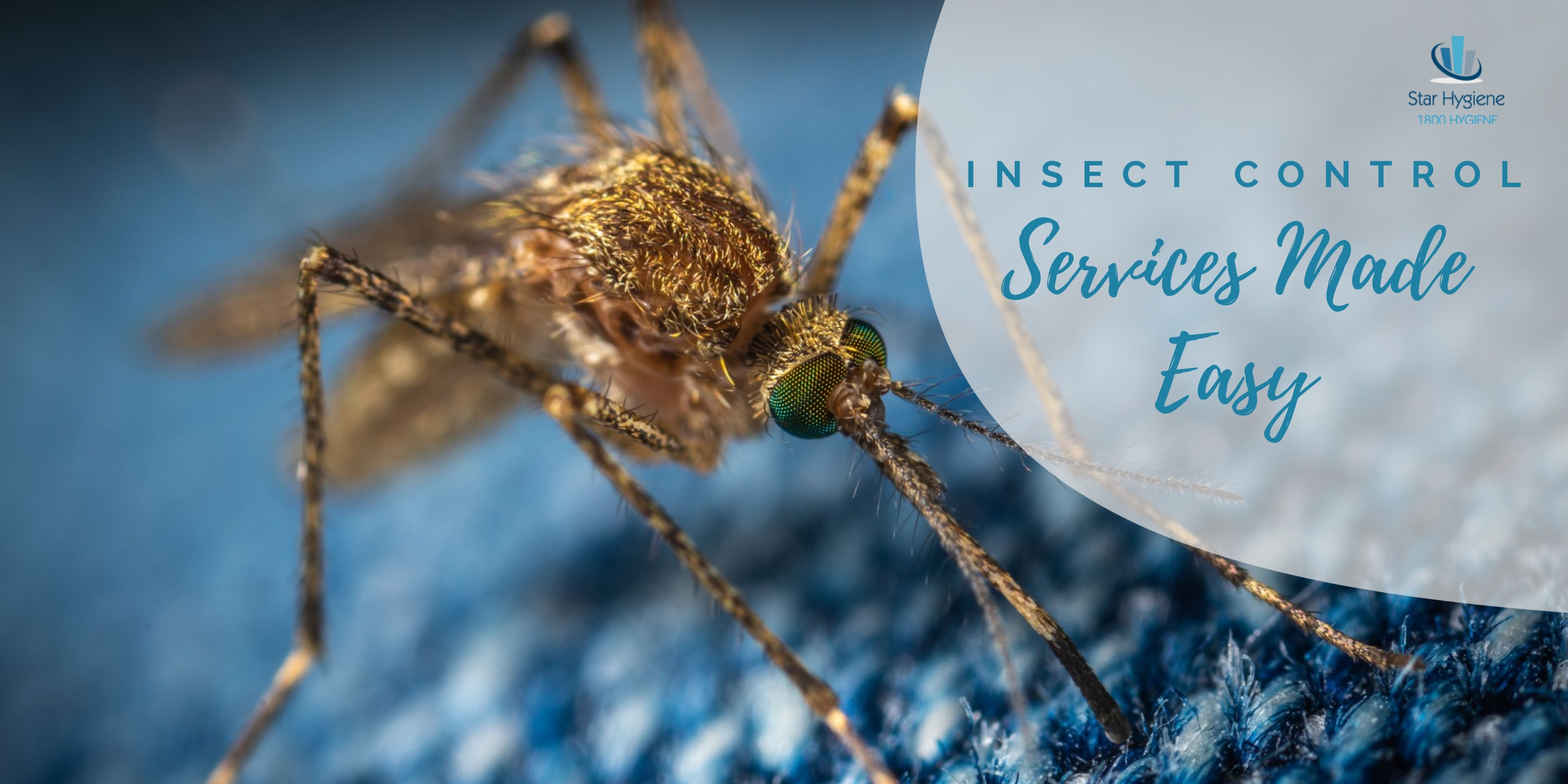 insect-control-website-header-2.jpg
