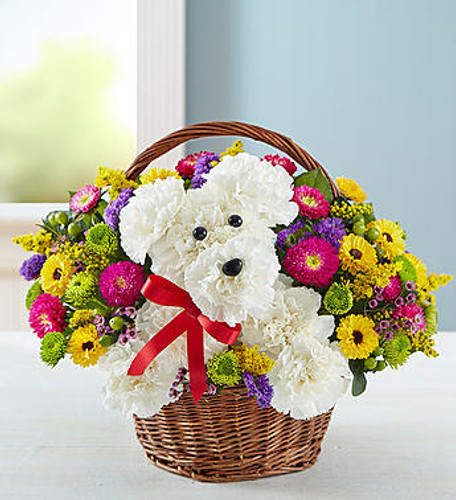 a-DOG-able in a Basket EXCLUSIVE Unleash the smiles with our original a-DOG-able arrangement! Hand-designed inside a reusable handled basket, this customer favorite floral creation makes a great gift for pet lovers or anyone who could use a little puppy love in their life.