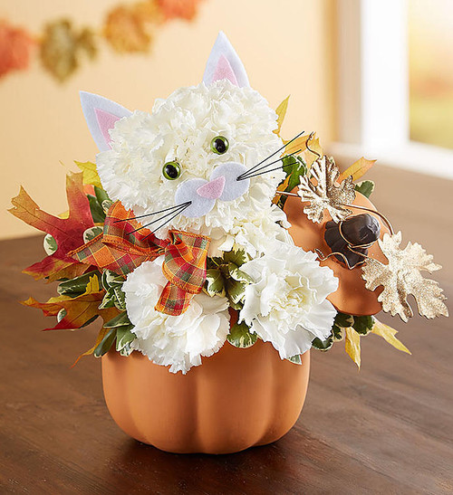 """EXCLUSIVE If they love cats, they'll fall for this fabulous feline. Our unique kitty arrangement is crafted from fresh, white carnations and dons a charming, seasonal plaid ribbon. She arrives in our artful ceramic pumpkin complete with lid, gold-glittered and oak leaf accents, which can be later used to hold treats, or simply to add a delightful touch of fall décor.  One-sided 3D arrangement with white carnations and greenery; accented with dried oak leaves and decorative ribbon Crafted in the shape of a cat, complete with eyes, ears, and mouth with whiskers Artistically designed in our reusable orange ceramic pumpkin canister with lid and decorative gold glitter, metallic leaves; measures 6""""H x 5""""W x 5""""L Arrangement measures approximately 11""""H x 9""""L"""