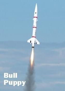 Bull Puppy