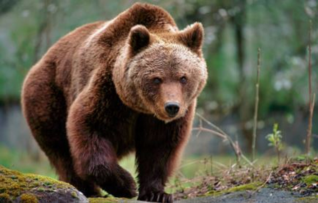 Bear Poo - Aroma Oil