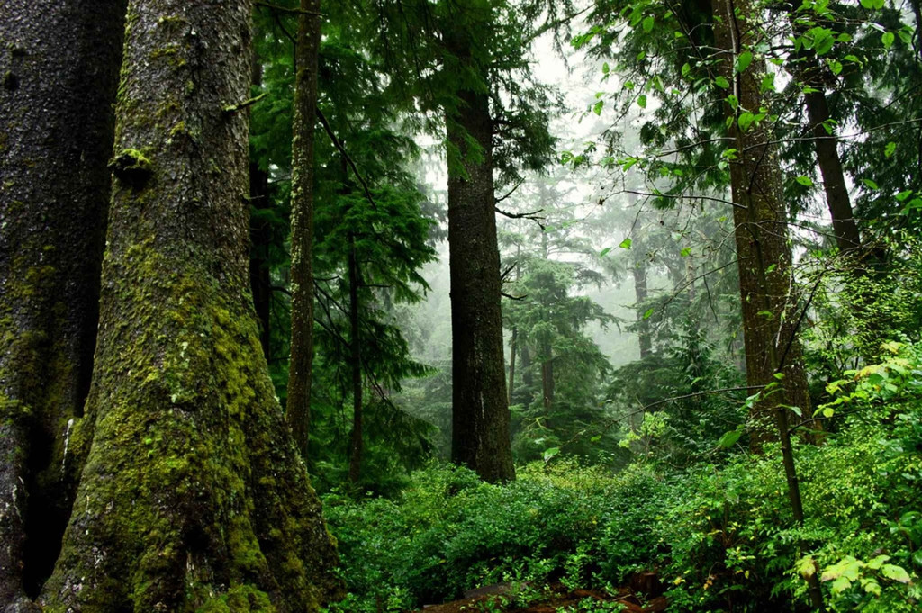 The damp, earthy aroma of a forest undergrowth. Great for both educational and fantastical environments.