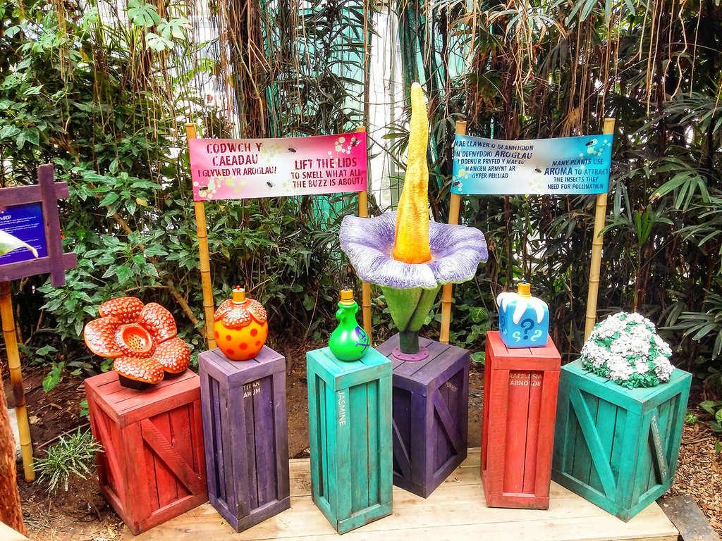 New AromaPrime Display in Rainforest Attraction