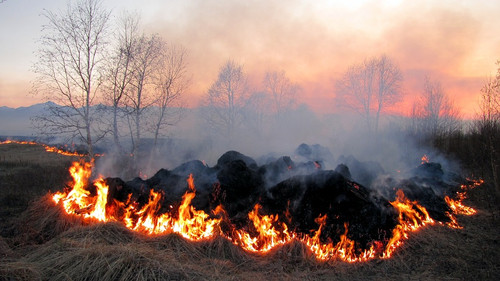 The earthy scent of burning compost and farmyards.