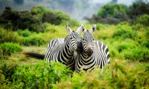 A mix of grass and animals on the African savannah.