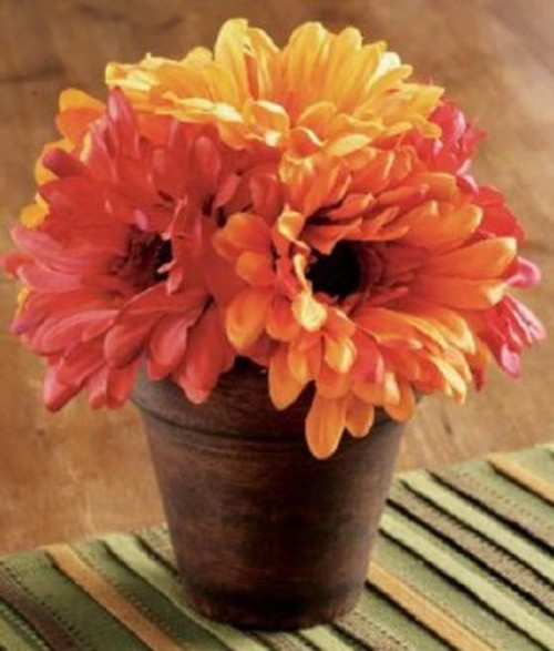 TAG - Potted Gerber Daisies