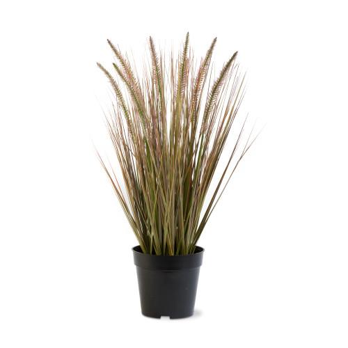 TAG Cattail Grass