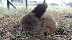 Quality made, Alpaca bunny rabbit.