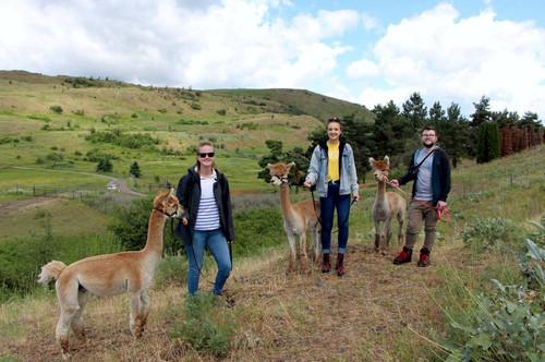 Alpaca Walks Canada, Camelot Haven Alpacas