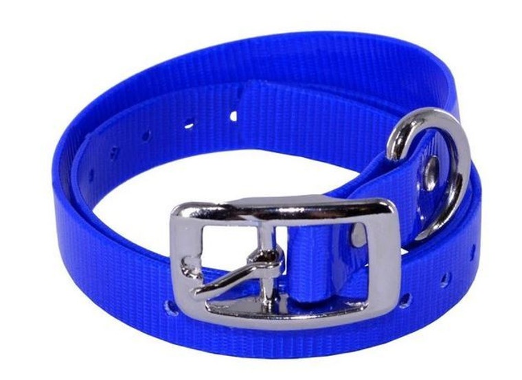dayglo collar in solid colors with d-ring and buckle