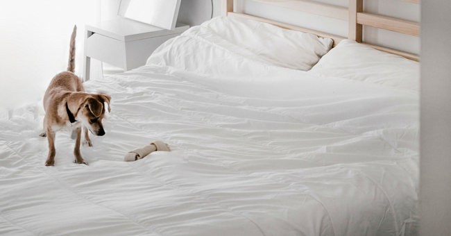 Transform your mattress into a softer one