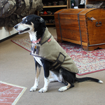 This Dog vest is reliable and adjustable to meet the needs of most midsized dogs. The waxed canvas used to make this vest is water resistant and durable.