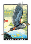 Grey Heron Postcard Front, illustrated by Duluth's Rick Kollath