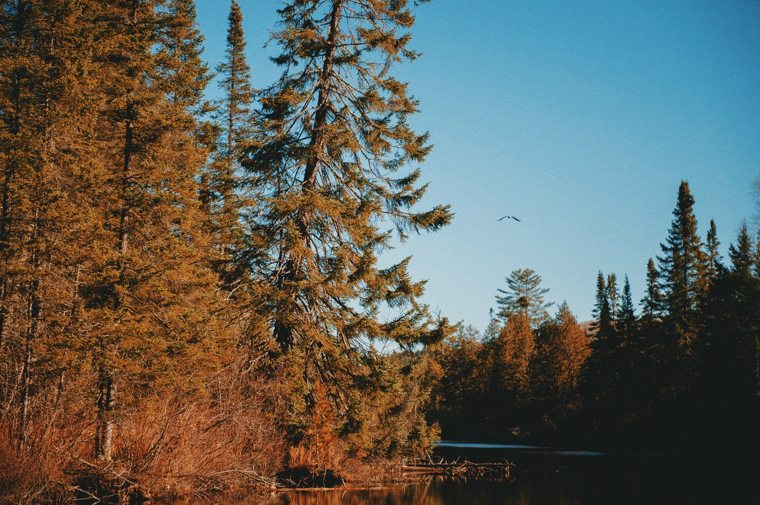 Field Journal: Among eagles, trout and cabins