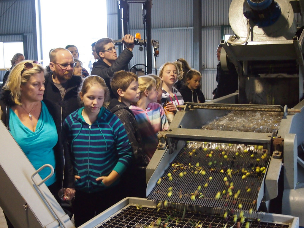 Tour of olive pressing plant