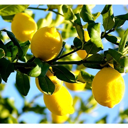 Lemon Essential Oil 100% pure. 12ml Skin Care Relieves Stress Boosts Immune system Treats Asthma Regulates Sleep Treats Stomach Disorders Hair Care Weight Loss Reduces Fever