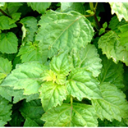 Patchouli Essential Oil 100% pure. 12ml Relieves Depression Soothes Inflammation Prevents Infections Aphrodisiac Astringent Speeds up Healing Stimulates Blood Circulation Eliminated Bad Odor Diuretic Fights Fever Inhibits Fungal Growth Insecticidal Properties Sedative Effect Acts as Tonic