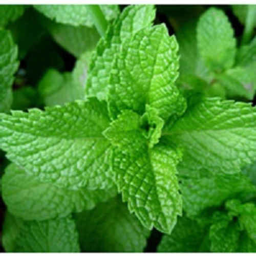 Peppermint Essential Oil 100% pure. 12ml Improves Digestion Dental care Nail Care Relieves Headache Reduces Stress Relieves Spasms Treats Urinary Tract Infection Treats Respiratory problems Reduces Pain Boosts Immune system Improves Blood circulation Hair Care Skin Care