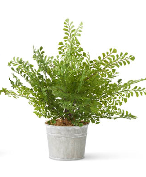 Floral Fern in Metal Pot
