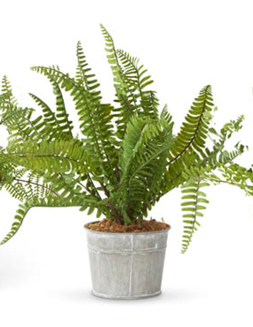 Floral Boston Fern in Metal Pot