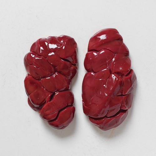 Beef Kidney ($7/lb)