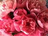 'Bouquet Perfect' - 100 stems