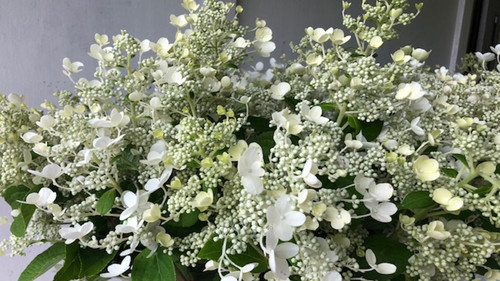 Lace Style (round heads)- 50 stems