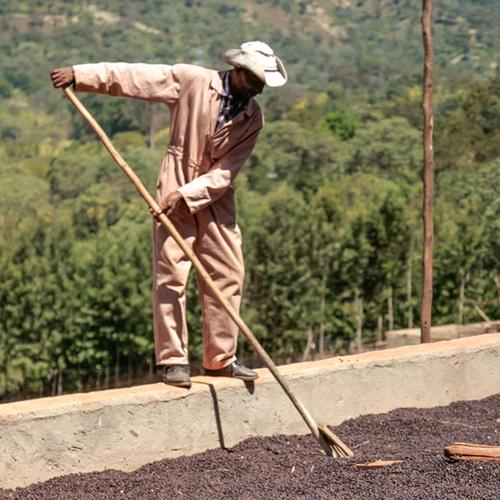 Ethiopia Ardi Dry Processed