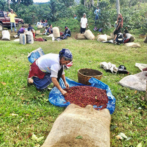 El Salvador Ricardo Kriete Red Bourbon Natural