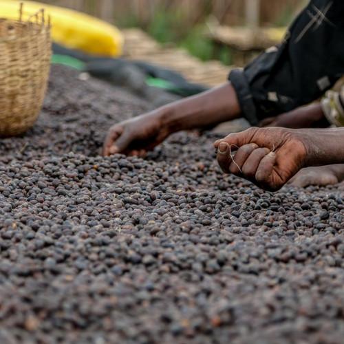 Ethiopia Mormora Dry Processed