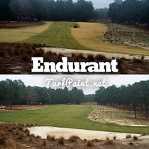 Endurant Turf Colorant  1 Gallon Jug Revitalizes Approximately 5,000 Sq. Ft of Dormant, Drought-Stricken or Patchy Lawn