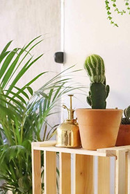 BRASS PLANT MISTER: Indoor Plant Mister, Terrarium Mister, Orchid Spritzer, Succulent Mister, Nickel Spray Bottle Mister, Plant Sprayer Mister | A Beautiful and Useful Houseplant Accessory