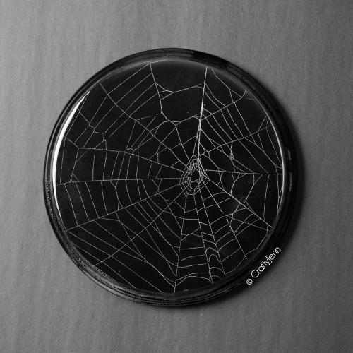 """Spider Web Artwork 7"""" Diameter -A"""