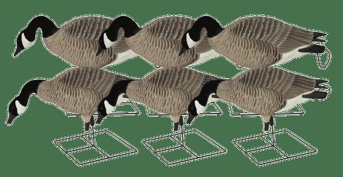 Avery GHG Pro-Grade XD Series Full Body Canada Goose – Feeder Pack